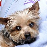 Adopt A Pet :: Skipper - Bedminster, NJ