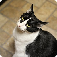 Adopt A Pet :: Joon - Marietta, GA