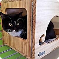 Adopt A Pet :: Mio - Peacedale, RI