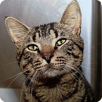 Adopt A Pet :: Big Ben - Chattanooga, TN