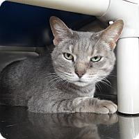 Adopt A Pet :: Ziggy - Elyria, OH