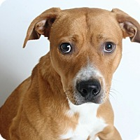 Adopt A Pet :: Tanner - Redding, CA