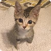 Adopt A Pet :: Hamilton 160988 - Atlanta, GA