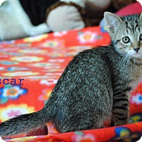 Adopt A Pet :: Oscar - Cutie! - Huntsville, ON