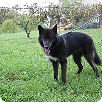 Adopt A Pet :: Morgandy - Nashua, NH