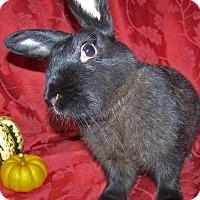 Adopt A Pet :: Evie - Alexandria, VA