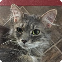 Adopt A Pet :: Rocki - San Antonio, TX