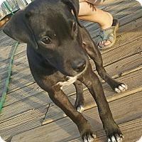 Adopt A Pet :: Maya - Cranston, RI