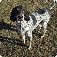 Adopt A Pet :: Blu - Indianola, IA