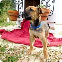 Adopt A Pet :: Razor - St. Francisville, LA