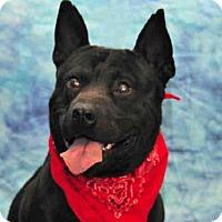 Adopt A Pet :: ROSCOE - Louisville, KY
