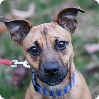 Adopt A Pet :: Charlie Dickens - ADOPTED - Nanuet, NY