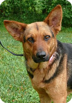 German Shepherd Dog Mix Dog for adoption in Nashville, Tennessee - Fiona