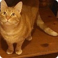 Adopt A Pet :: Jupiter - Pittstown, NJ