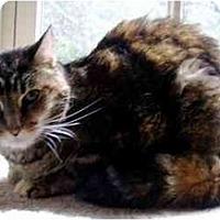 Adopt A Pet :: Tabitha - Davis, CA