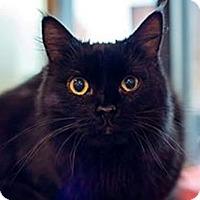 Adopt A Pet :: Lola - Fredericksburg, VA