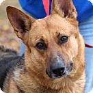 Adopt A Pet :: Jazzy 4455