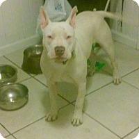 Adopt A Pet :: Casper, the best boy ever - Sacramento, CA