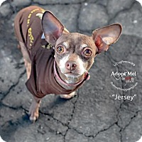 Adopt A Pet :: Jersey - Shawnee Mission, KS