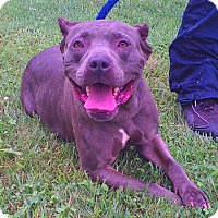 Adopt A Pet :: Dale Evans - Metamora, IN