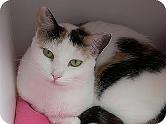 Calico Cat for adoption in Waxhaw, North Carolina - Sweetie Pie