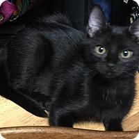 Adopt A Pet :: Jake - Garland, TX