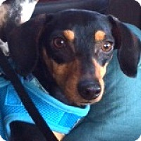 Adopt A Pet :: Hugo Hux - Houston, TX