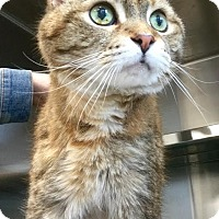 Adopt A Pet :: Tabitha - Webster, MA