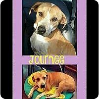 Adopt A Pet :: Journee - Milton, GA