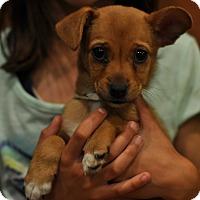 Adopt A Pet :: Kennedy - Sparta, NJ