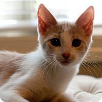 Adopt A Pet :: Enzo - Huntsville, AL