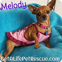 Adopt A Pet :: Melody - Wellington, FL
