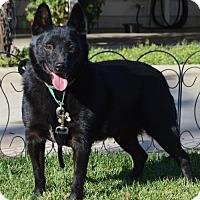 Adopt A Pet :: Skipper - Corona, CA