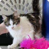 Adopt A Pet :: Elvira - Grinnell, IA