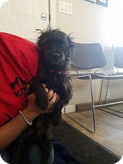Terrier (Unknown Type, Medium) Dog for adoption in Lemoore, California - Bob Marley