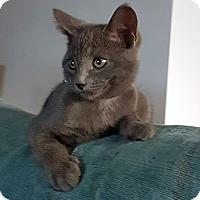 Adopt A Pet :: Bristol - Mississauga, Ontario, ON