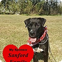 Labrador Retriever Mix Dog for adoption in San Leon, Texas - Abigail