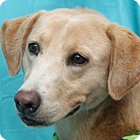 Adopt A Pet :: Zoie - New Roads, LA