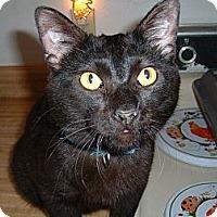 Adopt A Pet :: Dorsey - Springdale, AR