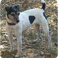 Adopt A Pet :: Judy - Omaha, NE