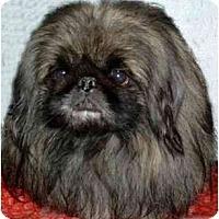 Adopt A Pet :: Hadien - Mays Landing, NJ