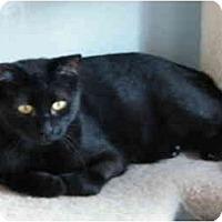 Adopt A Pet :: Walter - Modesto, CA