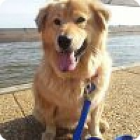 Adopt A Pet :: Dakota - Yorktown, VA