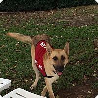 Adopt A Pet :: Gretal - Bowie, TX