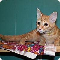 Adopt A Pet :: Pumpkin - Dover, OH