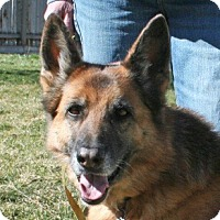Adopt A Pet :: BETSY-ADOPTION PENDING! - Nampa, ID