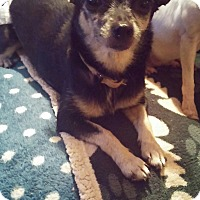Adopt A Pet :: Taylor - Brooksville, FL
