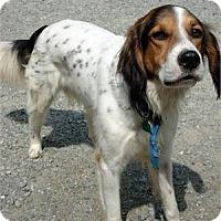 Adopt A Pet :: Felix - Richmond, VA