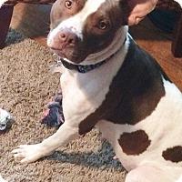 Adopt A Pet :: LAYLA - CHAMPAIGN, IL