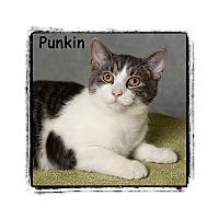 Adopt A Pet :: Punkin - Warren, PA